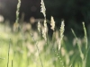 grass_light